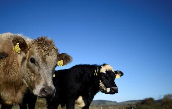 Bettinger bluff farm nyc marco bettingscore